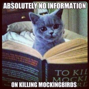 Cat Mockingbird